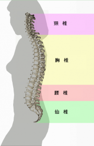 Spinal_column_curvature_(japanese)